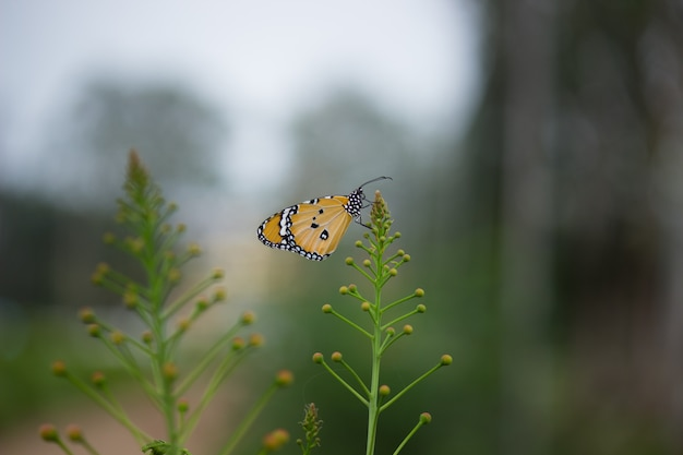 Vista lateral borboleta sentado na planta de flor