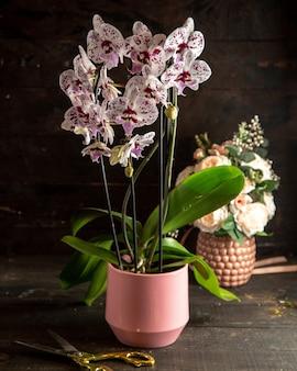 Vista lateral branca e roxa de orquídea manchada