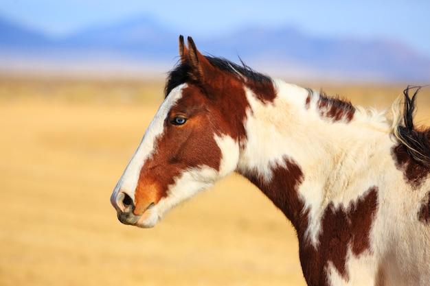 Vista lateral cavalo malhado