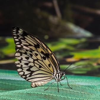 Vista lateral close-up de uma borboleta amarela detalhada