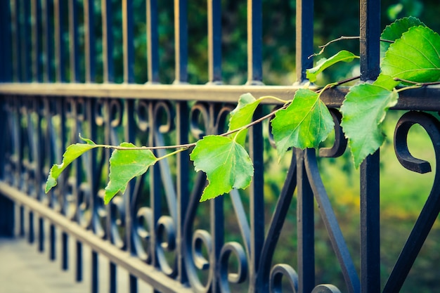 Vista lateral da cerca forjada de metal preto e do ramo da planta com folhas verdes. profundidade superficial de campo