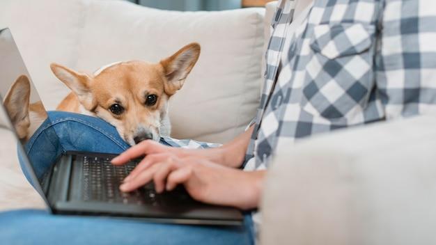 Vista lateral da mulher trabalhando no laptop com seu cachorro