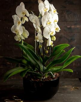 Vista lateral da orquídea branca