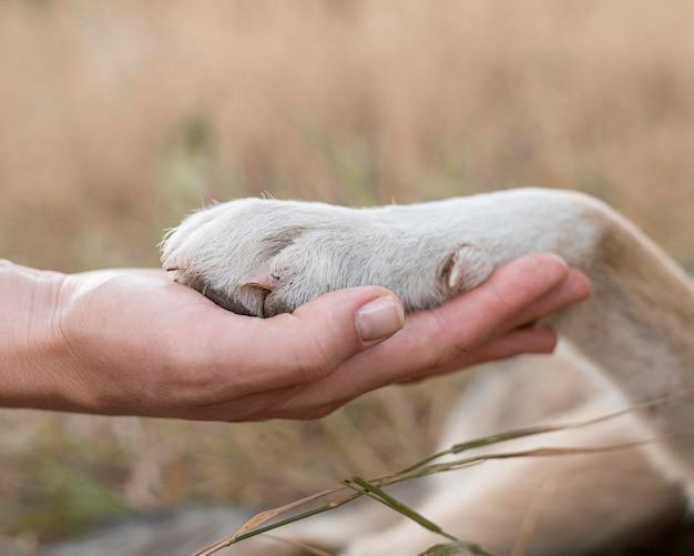 Vista lateral da pessoa segurando a pata do cachorro
