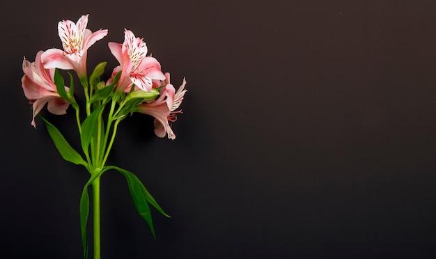 Vista lateral das flores de alstroemeria cor rosa isoladas no fundo preto, com espaço de cópia