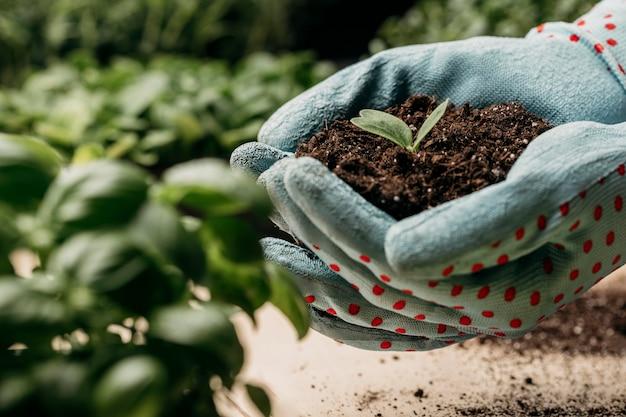 Vista lateral das mãos com luvas segurando solo e planta