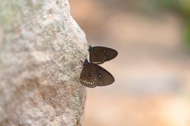 Vista lateral, de, borboleta marrom, com, branca, ponto, ligado, a, asas, perched, ligado, a, pedra