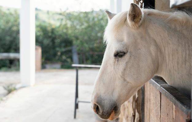 Vista lateral de cavalo em estábulos de fazenda
