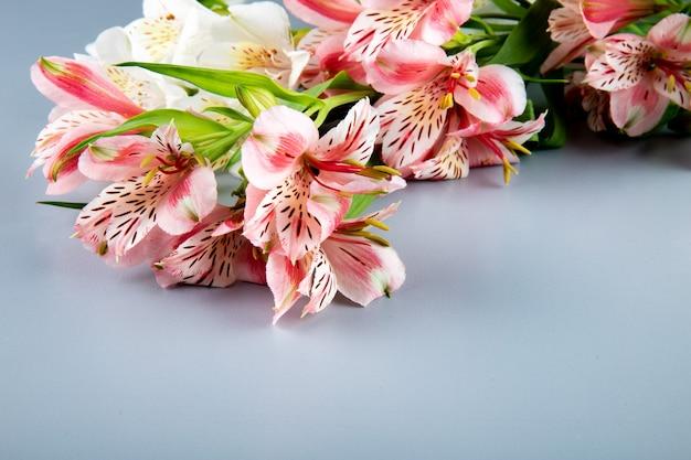 Vista lateral de flores de alstroemeria cor de rosa e branco sobre fundo cinza, com espaço de cópia