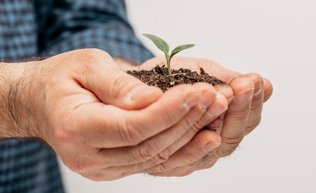 Vista lateral de mãos masculinas segurando o solo e uma plantinha