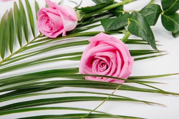Vista lateral de rosas cor de rosa em uma folha de palmeira em fundo branco