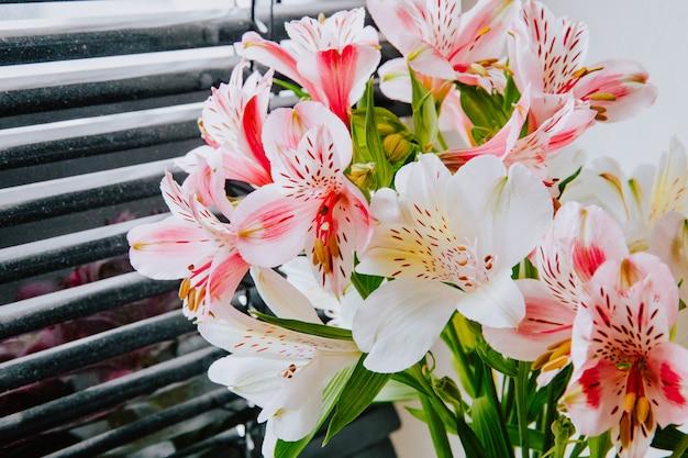 Vista lateral de um buquê de flores de alstroemeria cor de rosa e branco perto de cortinas da janela