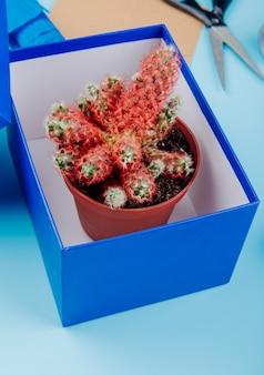 Vista lateral de um cacto em um vaso de flores em uma caixa em fundo azul