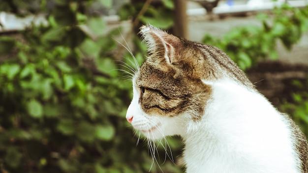 Vista lateral de um gato malhado de barbatanas na rua