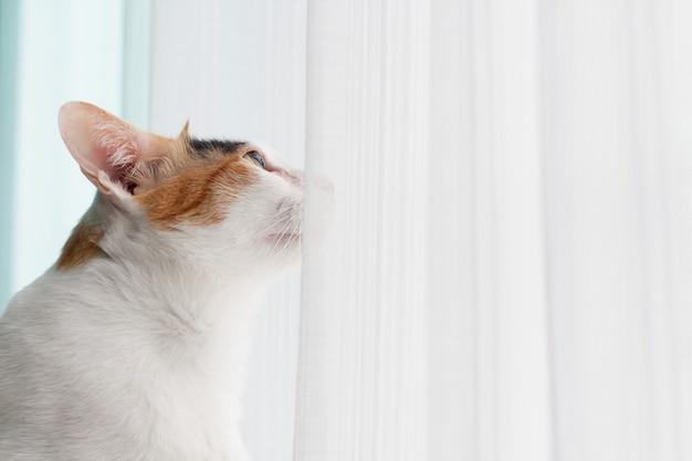 Vista lateral de um gato, o gato está olhando para algo de propósito.
