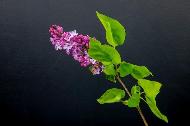 Vista lateral de um ramo de flores lilás isoladas no fundo preto, com espaço de cópia