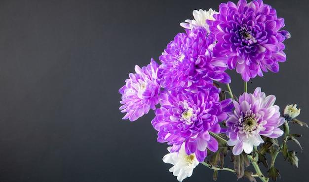 Vista lateral do buquê de flores de crisântemo violeta e branco cor isolado no fundo preto com espaço de cópia