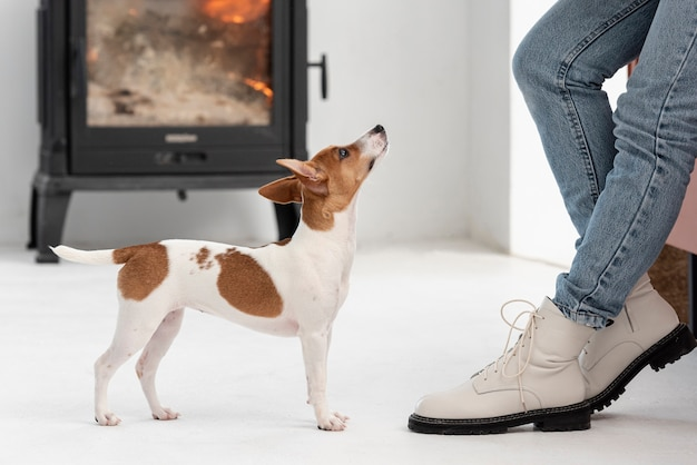 Vista lateral do cachorro olhando para seu dono