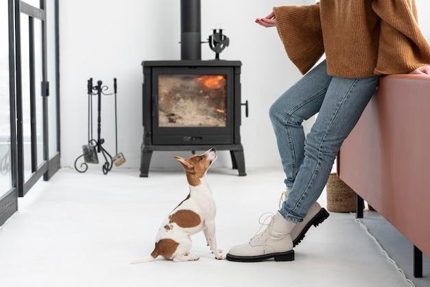 Vista lateral do cão ouvindo seu dono