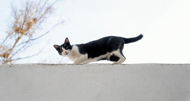Vista lateral do gato na parede da fazenda