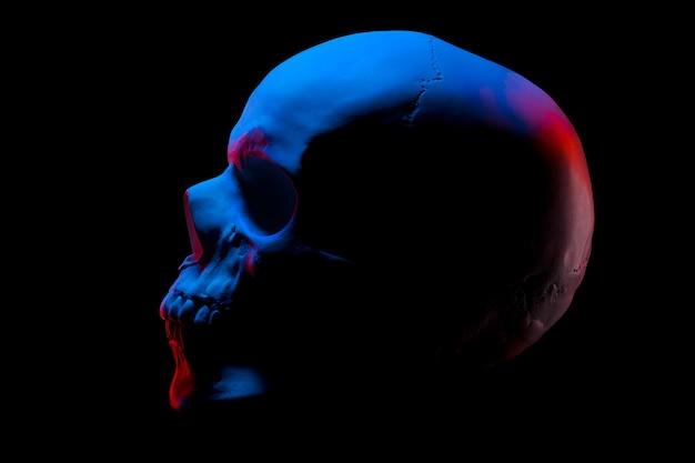 Vista lateral do modelo de gesso do crânio humano em luzes de néon isoladas em um fundo preto com traçado de recorte. conceito de terror, aprendizagem de fisiologia e desenho.