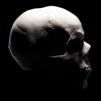 Vista lateral do modelo de gesso do crânio humano isolado no fundo preto com traçado de recorte. conceito de terror, aprendizagem de fisiologia e desenho.