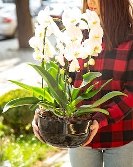 Vista lateral mulher mantém orquídea branca em uma panela