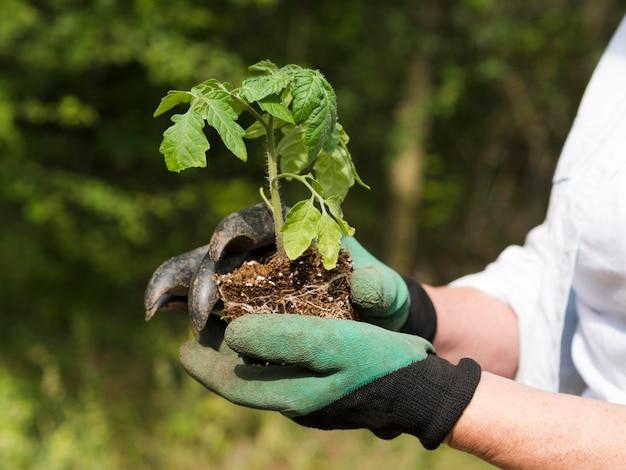 Vista lateral mulher segurando uma pequena planta nos braços