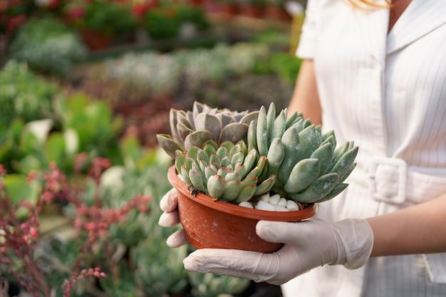 Vista lateral nas mãos de uma mulher usando luvas de borracha e roupas brancas segurando suculentas ou cactos em vasos com outras plantas verdes