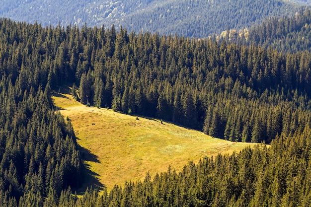 Vista majestosa do belo prado ensolarado nas montanhas dos cárpatos, densamente coberta com a floresta de abetos, ucrânia. dia ensolarado, beleza da natureza.