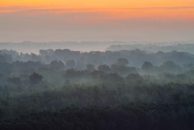 Vista mística de cima na floresta sob neblina no início da manhã.