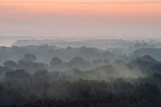 Vista mística de cima na floresta sob neblina no início da manhã