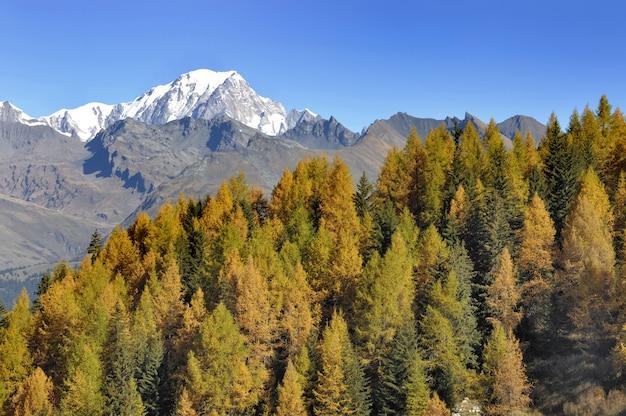 Vista no mont blanc, atrás de uma floresta