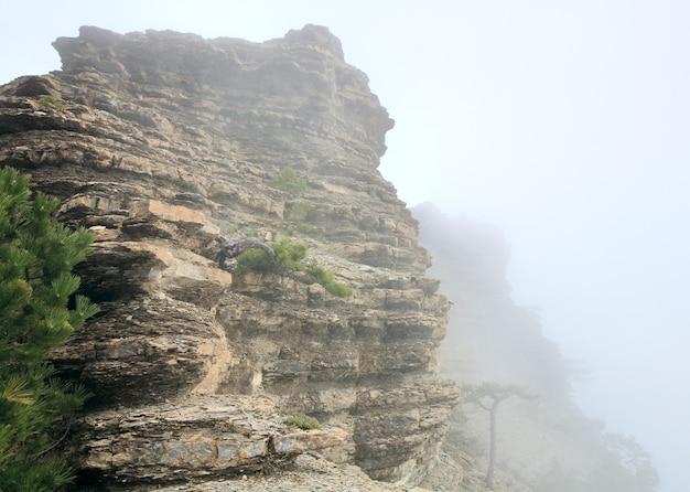 Vista nublada da montanha aj-petri e pinheiros na encosta (crimeia, ucrânia)