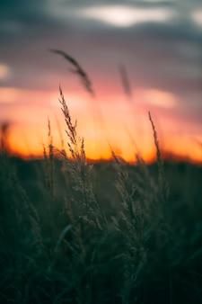 Vista pacífica da luz do pôr do sol