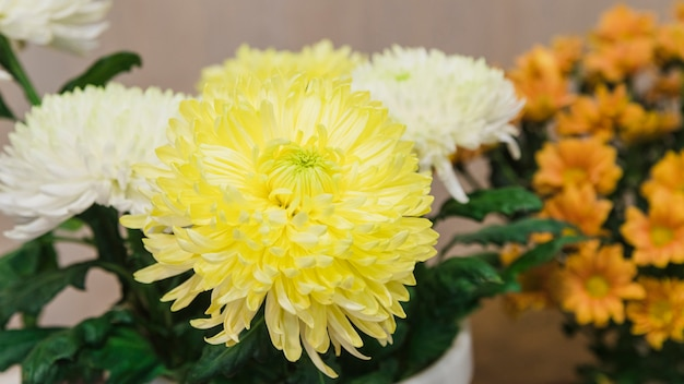 Vista panoramic, de, branco amarelo, crisântemos, flores
