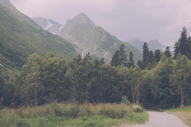 Vista panorâmica da cena da floresta profunda no parque nacional de dombay, cáucaso, na rússia. paisagem de verão, clima ensolarado e dia ensolarado