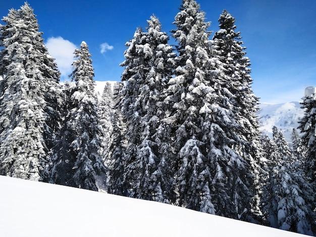 Vista panorâmica da floresta de coníferas com árvores nevadas em um dia ensolarado de inverno