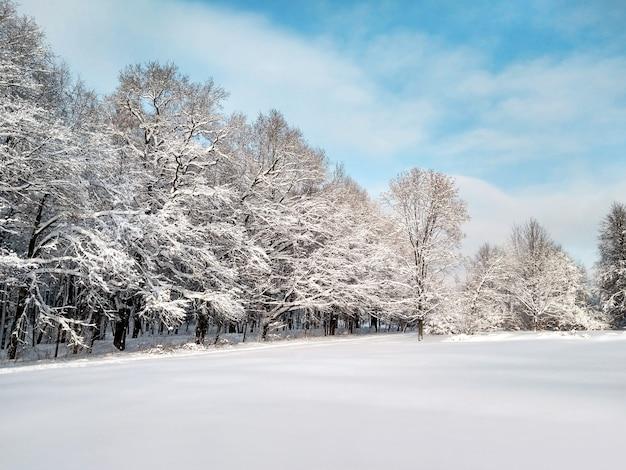 Vista panorâmica da floresta de inverno com galhos cobertos de neve no céu azul