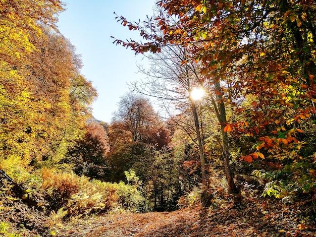 Vista panorâmica da floresta de outono com árvores e caminho