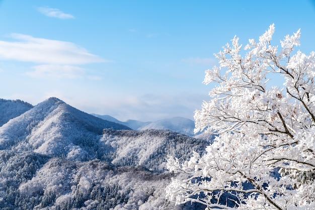 Vista panorâmica da paisagem do japão do deck de observação do hall godaido
