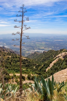 Vista panorâmica da paisagem montanhosa do topo da colina em um dia ensolarado de primavera. montanhas de montserrat, espanha. foto vertical.