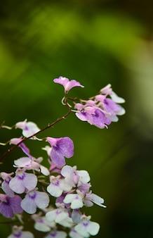 Vista panorâmica das florzinhas no jardim