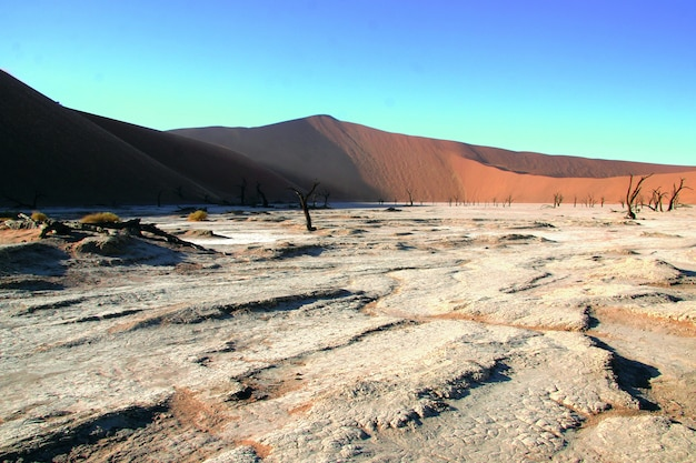 Vista panorâmica de árvores camelthorn mortas contra dunas vermelhas e céu azul em deadvlei sossusvlei
