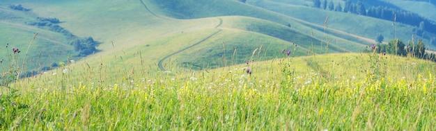 Vista panorâmica de colinas verdes de verão