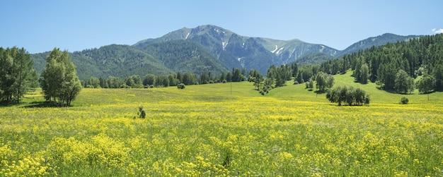 Vista panorâmica de um prado florido na montanha. dia de verão.