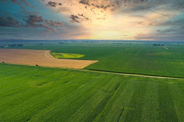 Vista panorâmica do campo verde da manhã durante o nascer do sol, a paisagem de verão