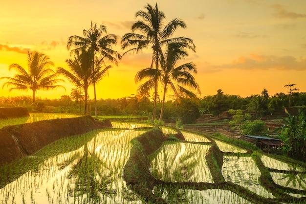 Vista panorâmica dos terraços de arroz kemumu com a luz do pôr do sol e reflexos do céu à tarde em north bengkulu, indonésia