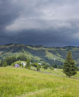 Vista para a montanha de verão com alta árvore de abeto. imagem composta de dois tiros.