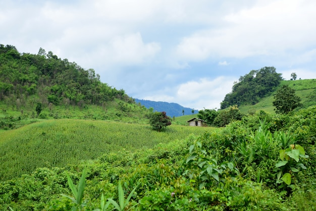 Vista para a montanha e campos de milho brilhantes. no dia do orvalho. montanhas e campo de milho no